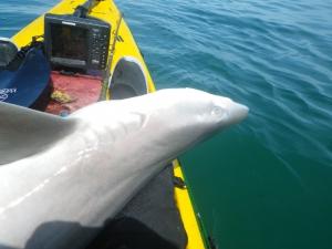 shark670
